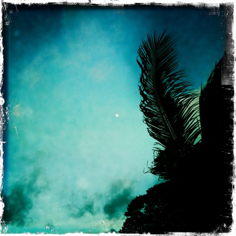 Moon and Palm Fronds