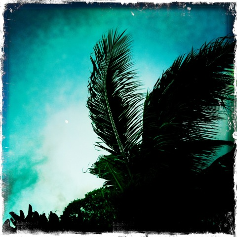 Moon and Palm Fronds 2