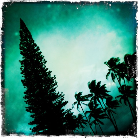 Pine and Palms