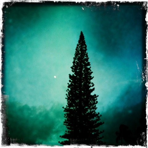 Moon and Pine